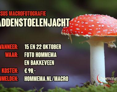 macrofotografie-paddenstoelenjacht-2