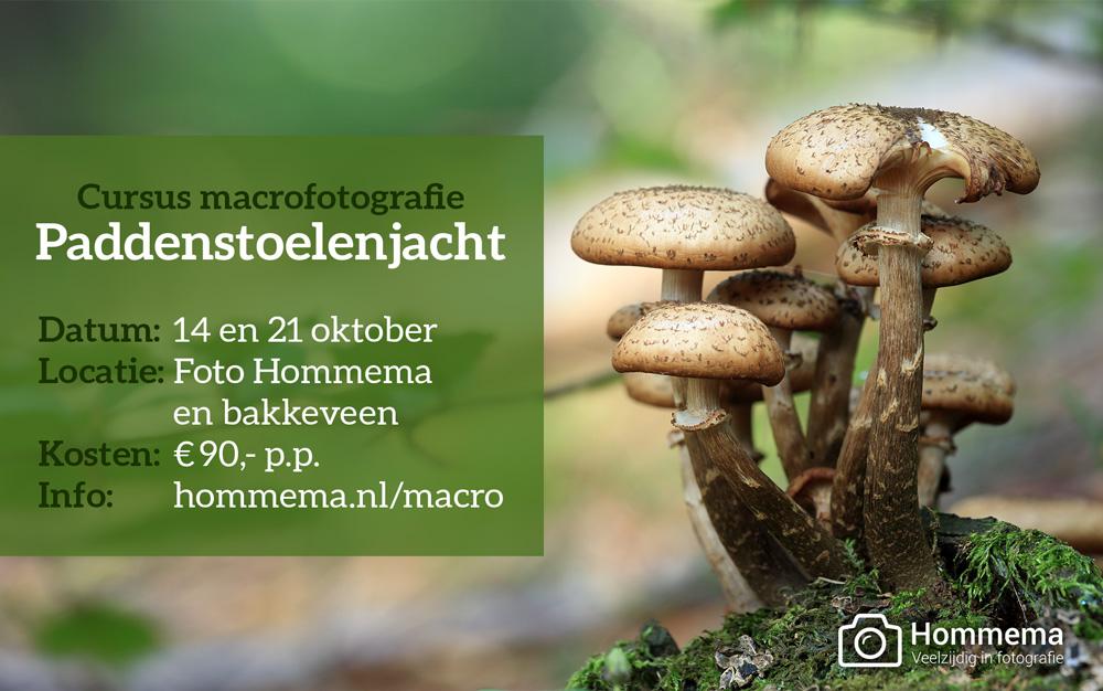 paddenstoelenjacht-2017
